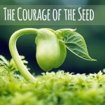 seeds-of-our-dreams-1 copy